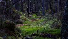 Skogen om våren